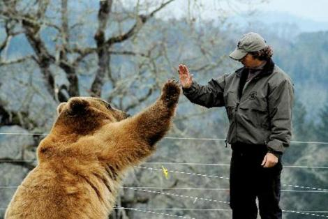 2 bears highfiving picture