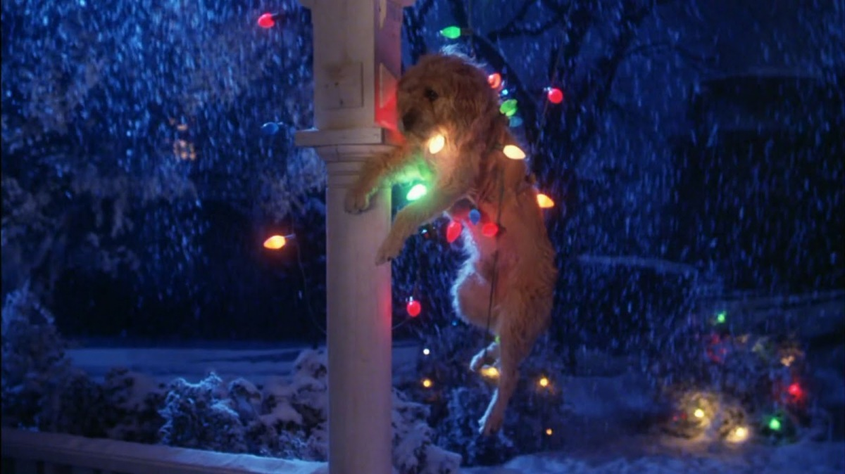Gremlins Christmas.Gremlins Movie Dog Christmas Lights The Wolfman Cometh