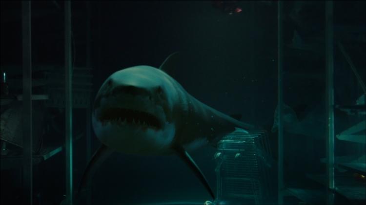 bait movie great white shark underwater
