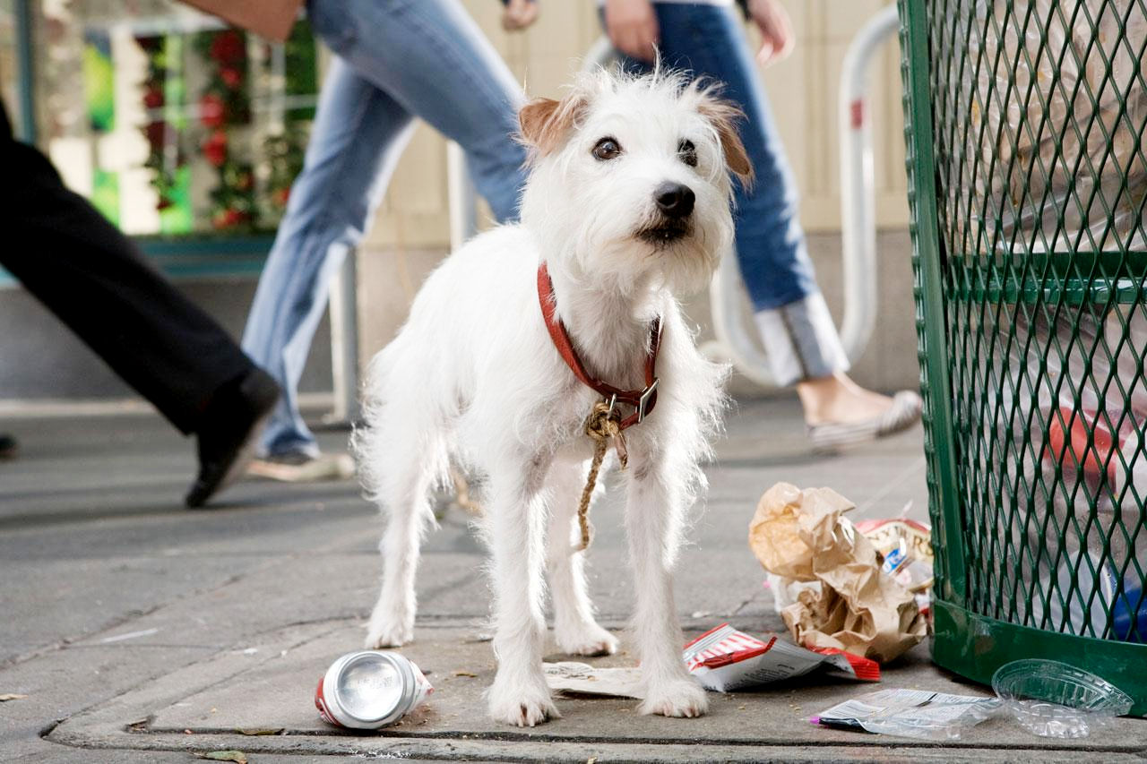 Hotel For Dogs 2009 Review The Wolfman Cometh
