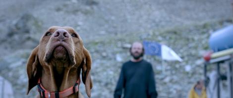 blood glacier blutgletscher movie dog