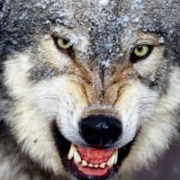 """...And From the Ashes Rises """"Wolfman: The Hater"""""""